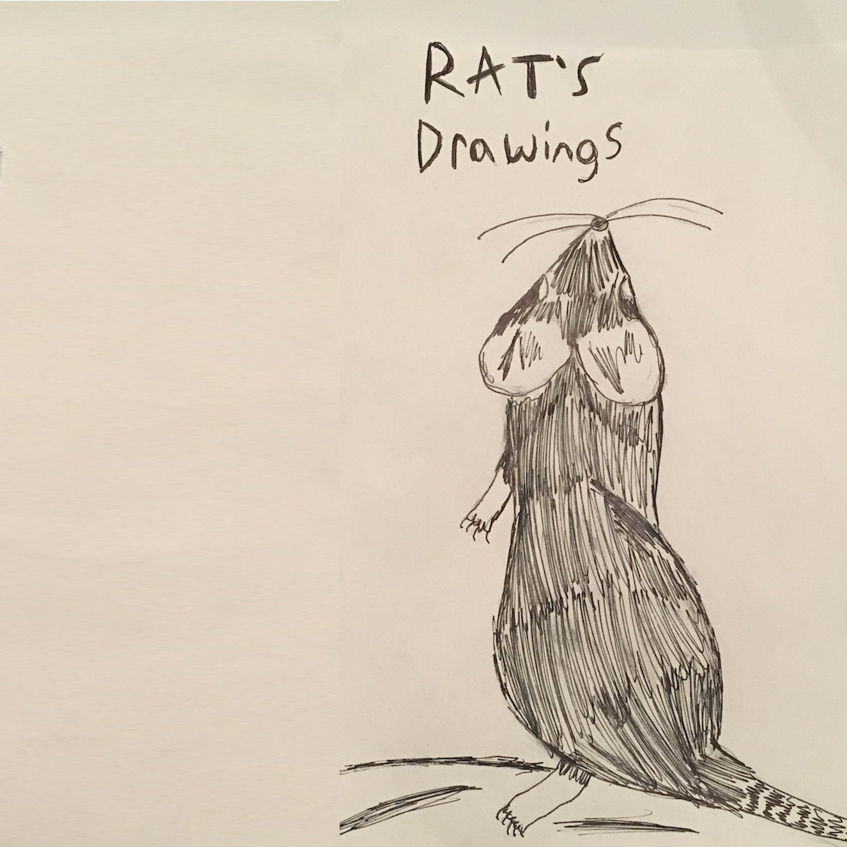 Rat's Drawings